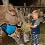 Familienurlaub am Bauernhof - Füttern der Tiere